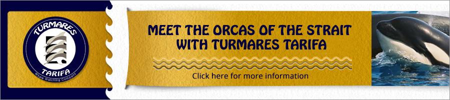 Banner Turmares