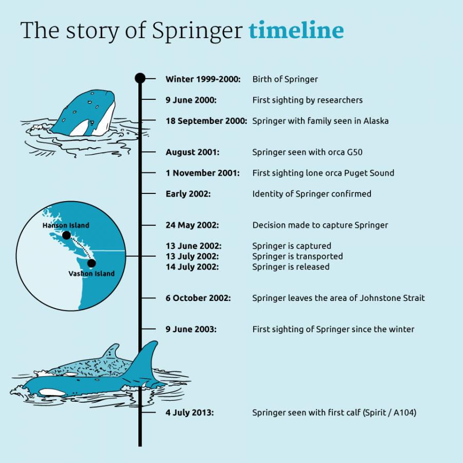 Tijdlijn-Springer-ENG