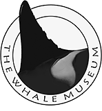 Whale museum logo