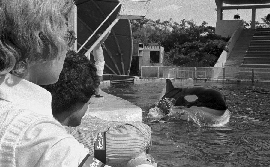 Employees Sylvia Coleman (left) and Leo Scott of Seven Seas, Arlington, watching Newtka the Killer Whale and wearing black armbands in protest over closing of the park, 10/09/1974
