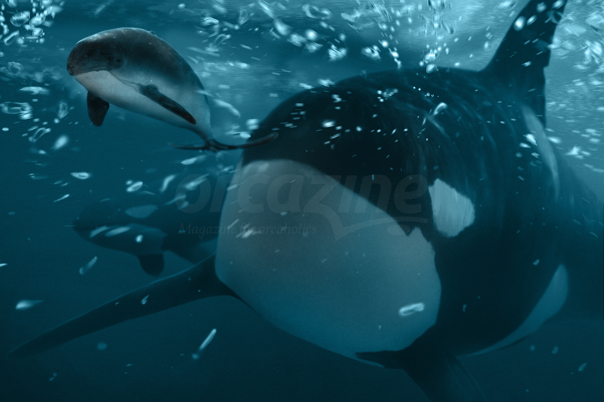 Why killer whales